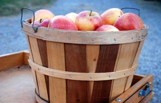 Bushel-of-apples1